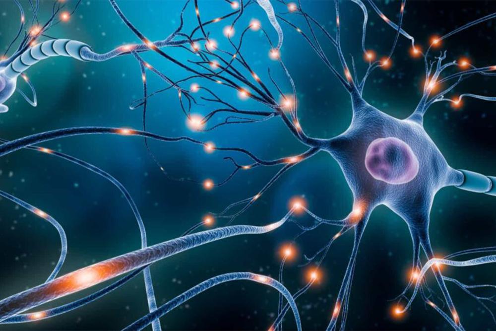 Aprendizagem e conexão entre neurônios.